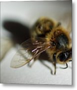 Bee Sitting On A White Sheet Metal Print