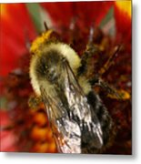 Bee Six - Metal Print