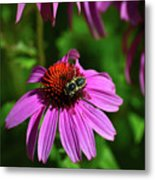 Bee Taking A Rest Metal Print