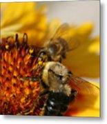Bee Two Metal Print