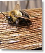 Bee-u-tiful Metal Print
