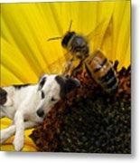 Bee With Dog Metal Print