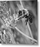 Bee Works Lavender Metal Print