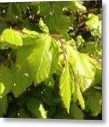 Beech Hedge In Spring Metal Print