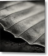 Beech Leaf Detail #1 Metal Print