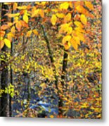 Beech Leaves Birch River Metal Print
