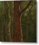 Beech Tree Metal Print