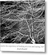 Beech Tree Branches, Light And Shadow Metal Print