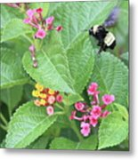 Beeing Amongst The Flowers Metal Print