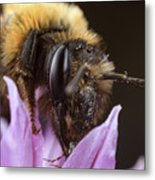 Bee's Eye Metal Print