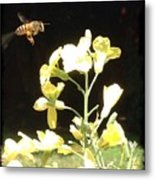 Bees Love Broccoli Metal Print