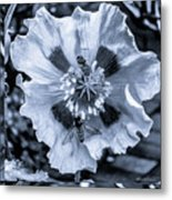Double Bees On Poppy Bw Metal Print