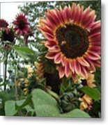 Bees On Sunflower 101 Metal Print