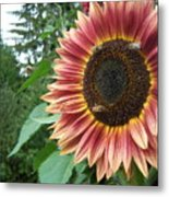 Bees On Sunflower 102 Metal Print