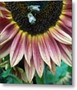 Bees On Sunflower 107 Metal Print