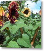 Bees On Sunflower 116 Metal Print