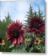 Bees On Sunflower 119 Metal Print