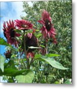 Bees On Sunflower 120 Metal Print