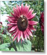 Bees On Sunflower 123 Metal Print