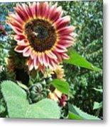 Bees On Sunflower 127 Metal Print