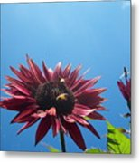 Bees On Sunflower 128 Metal Print