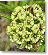 Bees Pollinating Metal Print
