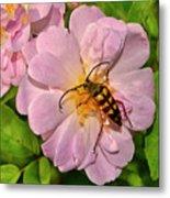 Beetle In A Rose 003 Metal Print