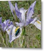 Beetle On Iris Metal Print