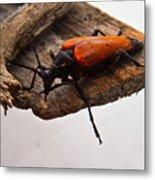 Beetle Pondering Metal Print