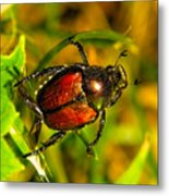 Beetle Take-off Metal Print