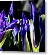 Before The Bloom Metal Print