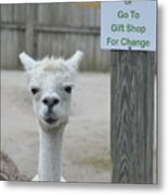 Begging Without A Word Metal Print