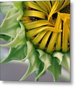 Beginning To Bloom Metal Print