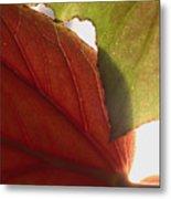 Begonia 1 Metal Print