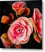 Begonia In Pink Metal Print
