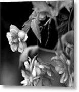 Begonias Metal Print