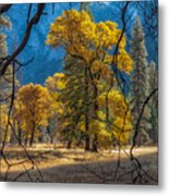 Behind The Branches Metal Print
