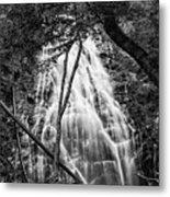 Behind The Tree-bw Metal Print