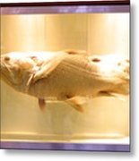 Beige Fish Metal Print