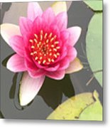 Beijing Lotus Metal Print
