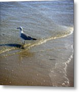 Being One With The Gulf - Reflecting Metal Print