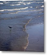 Being One With The Gulf - Vigilant Metal Print