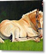 Belgian Horse Foal Metal Print