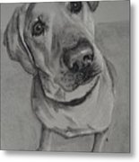 Bella Bean Labrador Retriever Metal Print