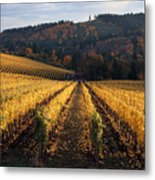 Bella Vida Vineyard 1 Metal Print