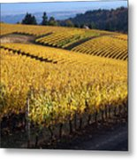 Bella Vida Vineyard 3 Metal Print