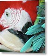 belle Ara Macao oiseaux tropicaux de Maui  Metal Print
