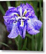 Bellevue Botanical Garden Iris 6402 Metal Print