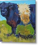 Belted Galloway Cow - The Blue Beltie Metal Print