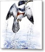 Belted Kingfisher Metal Print by Christopher Cox